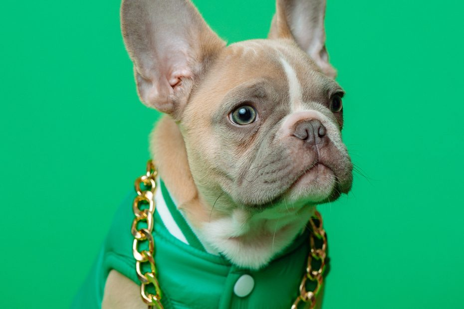 How much a French Bulldog cost?